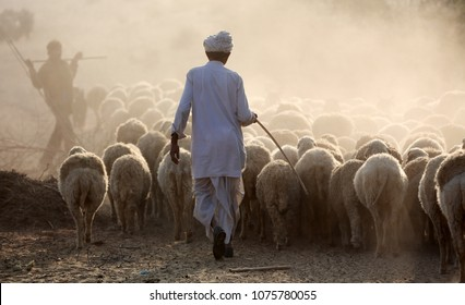 JAISALMER - INDIA - JANUARY 23, 2016: Unidentified shepard with a herd of sheep in the Thar Desert on January 23, 2016 in Jaisalmer, India
