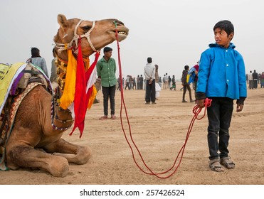 JAISALMER, INDIA - MAR 2: Unidentified boy holding the bridle of a large camel in the indian countryside on March 2, 2015. Every year in the february Jaisalmer takes the famous Desert Festival.