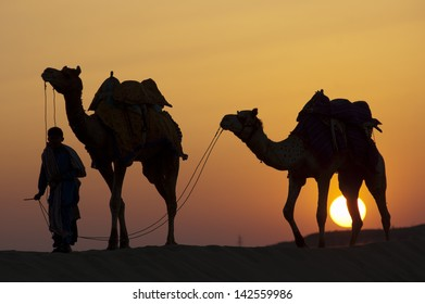 JAISALMER, INDIA-FEB 26: A desert local walks camels through Thar Desert, on Feb 26, 2013 in Jaisalmer, India.  Apart from farming, camel riding activity is another income source for desert villagers