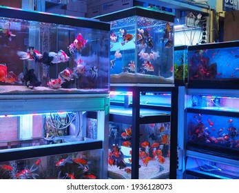 Jakarta, Indonesia February 19, 2021. Display of variety of aquariums at the fish seller and vendor for Fish hobbyist.