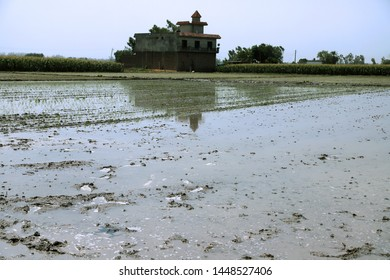 Jalandhar, Haryana, India, June 27, 2019: Paddy Field. Paddy, also called rice paddy, small, level, flooded field used to cultivate rice in southern and eastern Asia.