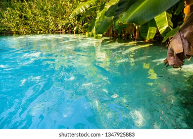 JALAPAO, BRAZIL - CIRCA SEPTEMBER, 2018: Fervedouro Buritis is one of the crystalline water springs that sprout from the sand where tourists can swim in the region of Jalapao, Tocantins