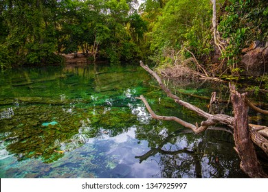 JALAPAO, BRAZIL - CIRCA SEPTEMBER, 2018: Japanese Lagoon is one of the most popular tourist attractions in the Jalapao region, in the state of Tocantins, due to its intensely green/blue waters