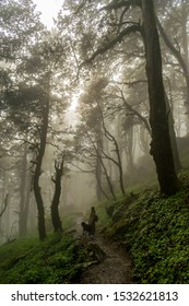 Jalori Pass, Himachal Pradesh, India; 20-September-2019; a woman backpacker and her dog on a forest trail, Jalori Pass, Tirthan Valley, Himachal Pradesh, India
