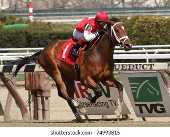 "JAMAICA, NY - APR 9: ""Iron Lou"", under jockey John Velazquez, breaks his maiden at Aqueduct Race Track on Apr 9, 2011 in Jamaica, NY."