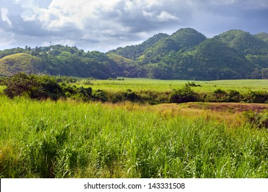 Jamaica. Tropical nature at a foot of the Nassau mountain.