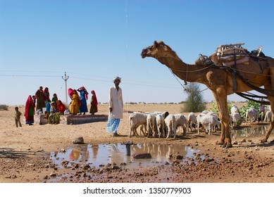Jamba, India - April 02, 2007: Camel and sheep drink water from a road side pond in the Thar desert in Jamba, India.