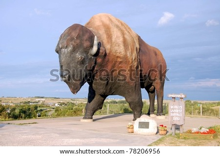 JAMESTOWN, ND - AUGUST 24: The World's Largest Buffalo, seen here on August 24, 2009, can be seen from I-94, and is nicknamed Dakota Thunder.  It is located in Frontier Village in Jamestown, ND