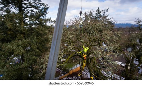January 11, 2017. Eugene, Oregon, USA. An arborist and tree service worker lifted by a crane ties a strap onto a tree damaged in an ice storm.