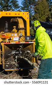 January 3, 2017. Eugene, Oregon, USA. A tree service worker feeds debris from a wind storm into a chipper machine.