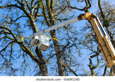 January 3, 2017. Eugene, Oregon, USA. Closeup of a lift bucket lifting a tree service worker into a tree damaged in an ice storm.  Workers are cleaning up after an ice storm in the Willamette Valley.