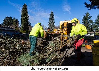 January 3, 2017. Eugene, Oregon, USA. Action shot of an arborist and tree service worker cleaning up branches cut from a tree damaged in an ice storm.