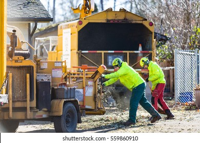 January 3, 2017. Eugene, Oregon, USA. Workers from a tree service feed debris left over from a winter ice and wind storm into a chipper for disposal.