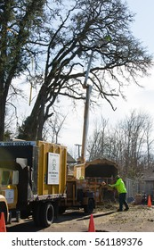 January 3, 2017. Eugene, Oregon, USA. Tree service workers cleanup debris cut from a tree damaged in a winter ice and wind storm