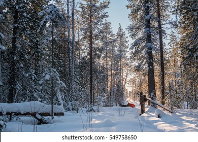 January 3, 2017 - Russia, Yugra, Surgut district - View of Siberian taiga forest and a sable trapper walking on skis among big trees and snow, checking his trapline