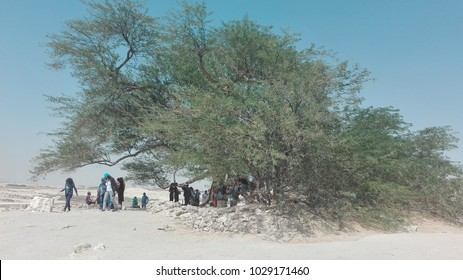 Tree of Life Bahrain Images, Stock Photos & Vectors | Shutterstock