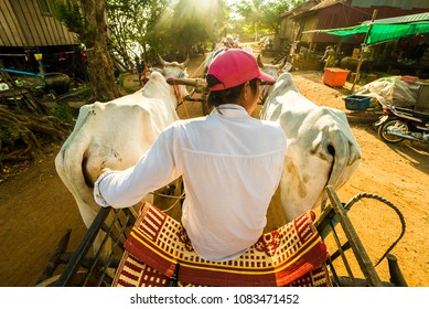 JANUARY 9,2017: Ox-cart - traditional Cambodian transport. Image taken at KAMPONG TRALACH- rural Cambodian village.