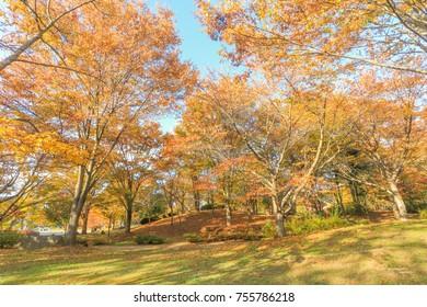 Japan autumn , Beautiful autumn leaves of Obuse park ,Nagano Prefecture,Japan.
