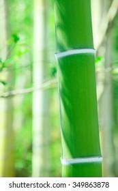 Japan, bamboo