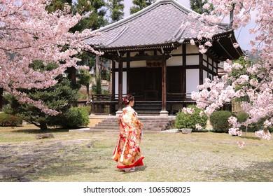Japan bride in kimono in  sakura garden