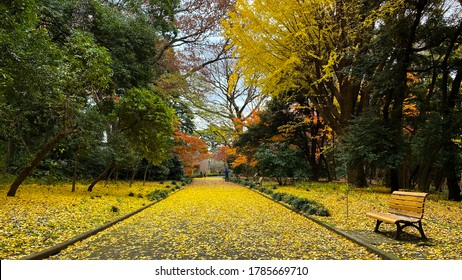 Japan –13 Dec,2019 : Colorful from autumn leaves ,red momiji (maple tree) in Shinjuku Gyeon Park.