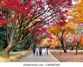 Japan –13 Dec,2019 : Group of traveler relax under autumn leaves ,red momiji (maple tree) in Shinjuku Gyeon Park.