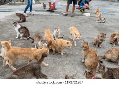 Japan Ehime Prefecture Ozu City Island with many cats aosima