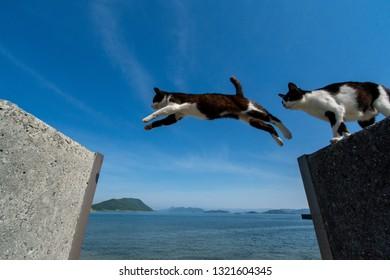 japan jumping cats
