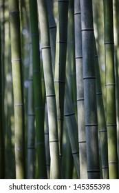 Japan Kyoto bamboo grove close-up