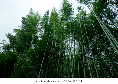 Japan Kyoto green bamboo forest bamboo grove