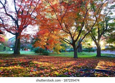 Japan Kyoto Maple