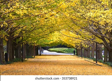 Japan, Landscape forest of yellow Ginkgo leaf pattern background in autumn and unrecognized people