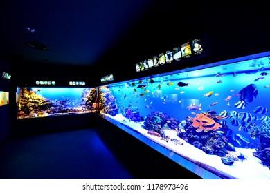 japan mie 23-5-16; inside Toba Aquarium of MIE.