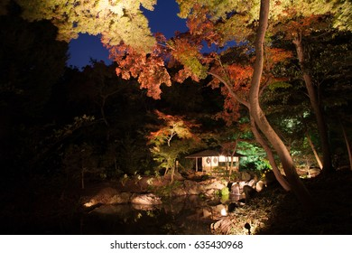Japan night autumn, Light up at Kenroku-en, Tokyo