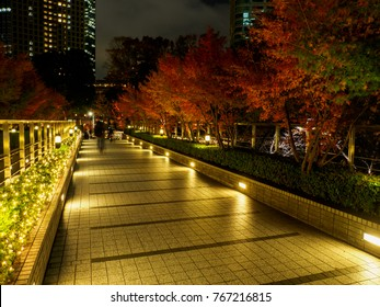 Japan Night view illumination