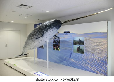 Japan Osaka Kaiyukan Sea Aquarium on 25 November 2014 Narwhal