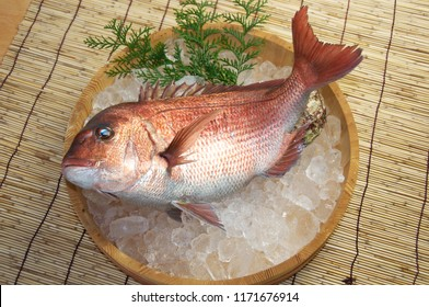 Japan Red sea bream is a name given to at least two species of fish of the family Sparidae, Pagrus major and Pagellus bogaraveo.