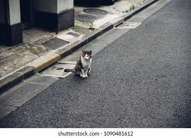 Japan tokyo akihabara street cat
