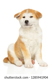 Japanese Akita sits in front of white background. Baby animal theme