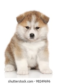 Japanese Akita-inu, akita inu dog puppy sits on a white background.