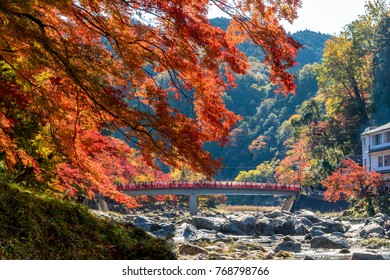 japanese autumn of beautiful colored leaves