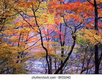 Japanese autumn scenery in mountain park-16