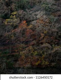 japanese autumn view landscape forest