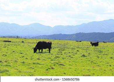 Japanese beef cattle