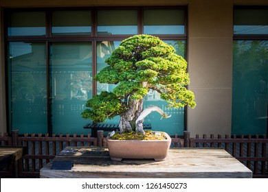 Japanese bonsai tree in Omiya bonsai village at Saitama, Japan
