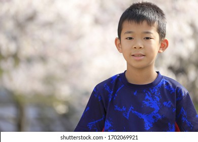 Japanese boy and cherry blossoms (fourth grade at elementary school)