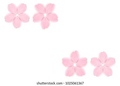 Japanese cherry blossom petals decoration on white background