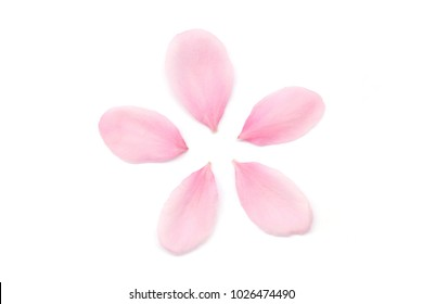 Japanese cherry blossom petals on white background