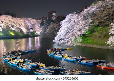 Japanese cherry blossoms Chidorigafuchi SAKURA,Tokyo(prefectures),tourism of japan