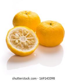 Japanese citron fruits of Yuzu citrus famous for aromatic zest, a hybrid between Citrus ichangensis and Citrus reticulata